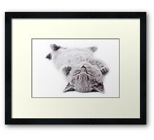 Funny gray fluffy kitten sleeps Framed Print