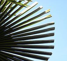 Alki Beach Palm by tmtphotography