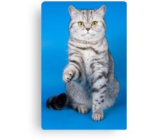 Tabby cat with a raised paw Britan Canvas Print