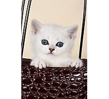 White British kitten with big eyes Photographic Print