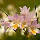 Roadside Beauty, Wildflowers of WA by Malcolm Katon