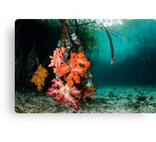 Soft Coral in Blue Water Mangroves Canvas Print