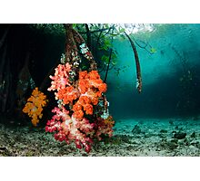 Soft Coral in Blue Water Mangroves Photographic Print