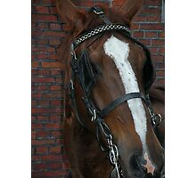 Horse in Bruges Photographic Print