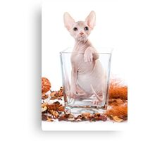 Funny sphinx kitten without hair Canvas Print