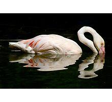 Flamingo Rose! Photographic Print