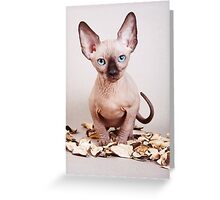 Sphynx kitten with blue eyes, no hair Greeting Card
