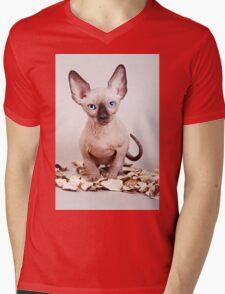 Sphynx kitten with blue eyes, no hair Mens V-Neck T-Shirt