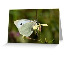 Female Large white butterfly Greeting Card