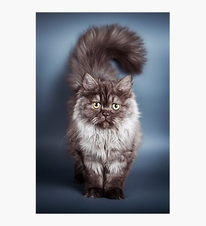 Fluffy black cat Photographic Print