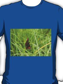 Scotch argus butterfly T-Shirt