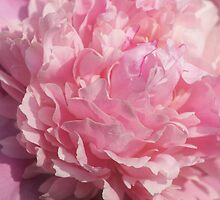 Softly Pink by Sandy Keeton