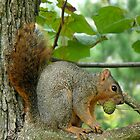 "Look who's calling whom ""Nuts""!!!!,,,. by worldtripper"