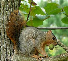 "Look who's calling whom ""Nuts""!!!!,,,. by Marita Sutherlin"