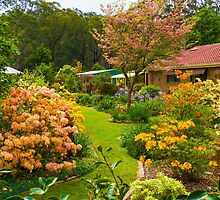 The Miracle Garden at King Parrot by sjphotocomau