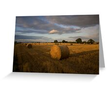Evening haybales Greeting Card