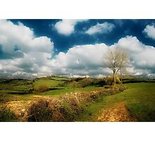 Ancient Hedgerows Photographic Print