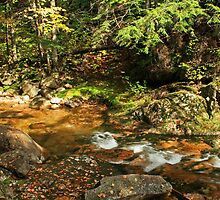 Stream and Rocks in Autumn by Peggy Berger