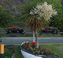 Little Ark in Wales by Quarryhill