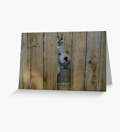 I can come out? Greeting Card
