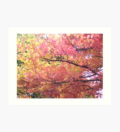 Autumn Colors Overhead Art Print