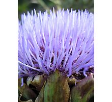 Soft and Spikey Photographic Print