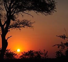Sabi Sands Sunset by tmhphoto