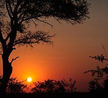 Sabi Sands Sunset by tmhphoto