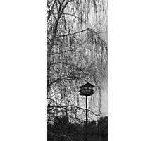 REDREAMING BIRD SANCTUARY. Photographic Print