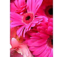 Petals Pink Photographic Print