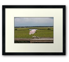 In Flight Flat Bill Framed Print