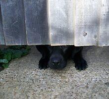 Cobweb peeking from under the gate. by Sin Bowld