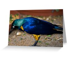 Royal Starling - Golden Breasted Starling Greeting Card