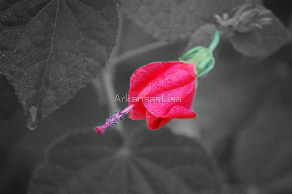 Red Turk's Cap #2 SC by ArkansasLisa