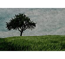 Fields of Green Skies of White Photographic Print