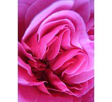Sugar Pink Folds No.2 Photographic Print