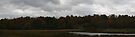 Autumn Collins Creek Marsh by Allen Lucas