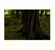 forest floor killarney national park Art Print