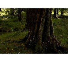 forest floor killarney national park Photographic Print