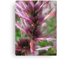 Pinks and Purps Canvas Print