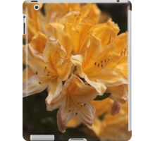 Rhododendron flowers iPad Case/Skin