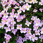 The Clematis...................................Most Products by Fara