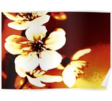 Oriental Blossom/Great White Cherry Abstract by Jenny Meehan Poster