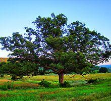 Giant Oak by tantricpark182