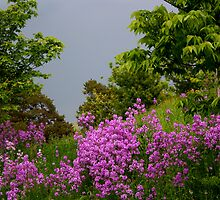 Flowers and stormcloud by tanmari