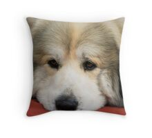 Shows are such a drag! Royal Melbourne Show - Series (10) Throw Pillow