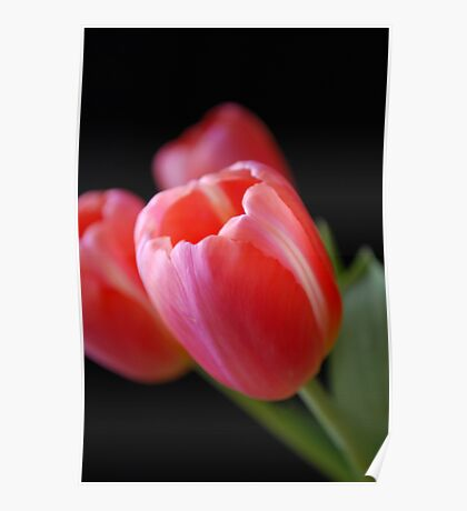 Tulips on Black Poster