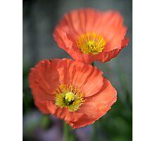 Orange Poppys with Lensbaby Photographic Print