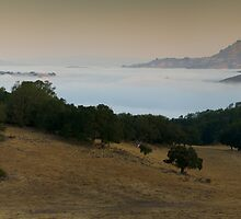 Dawn on Lone Tree Road  by Zane Paxton