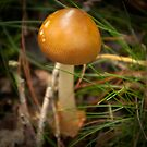 Golden Caramel Head  by steppeland